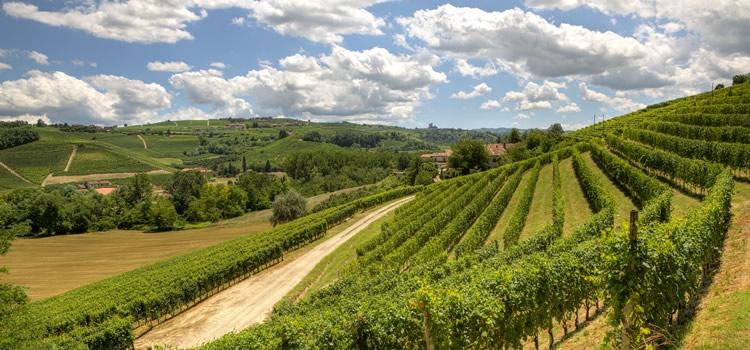 Procedura dematerializzazione registri vinicoli.
